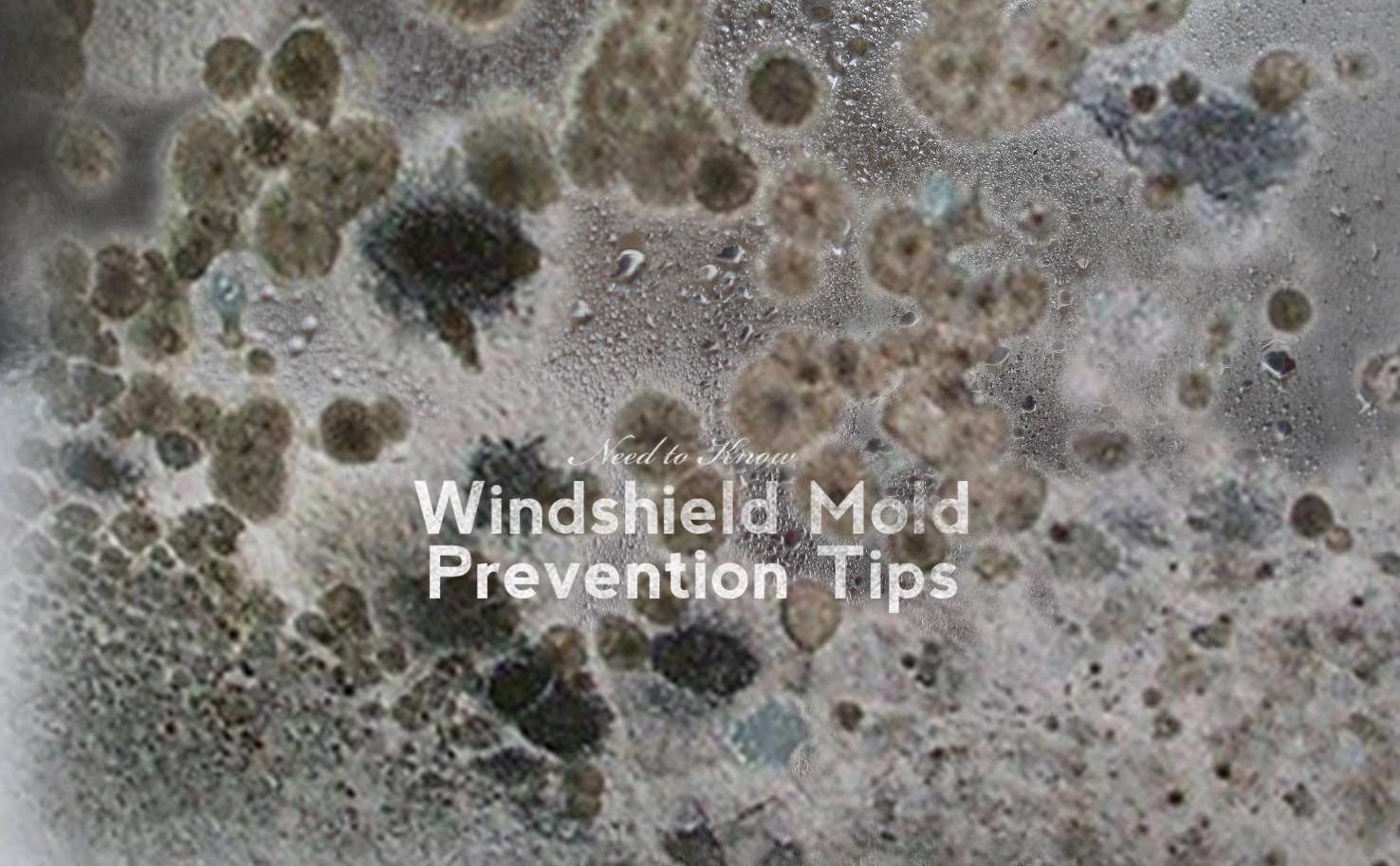 Need to Know: Windshield Mold